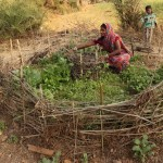 Villagers adopt rural innovations to increase profit