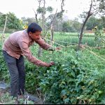 Farmers turn to organic farming in Bundelkhand
