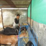Dare to dream: Sunita's journey from a homemaker to a successful goat rearer